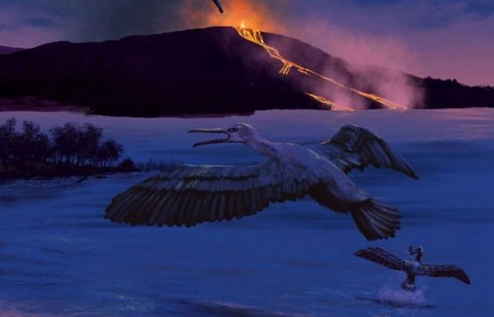 Вулканы раскрывают тайну: водяная птица Tingmiatornis arctica.