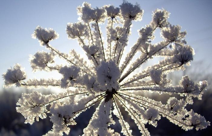 Причудливое зимние явление: «Изморозь».
