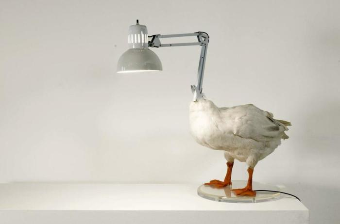 Светильник из чучела.