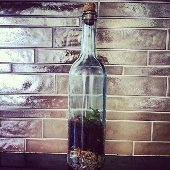 Растения в бутылке.