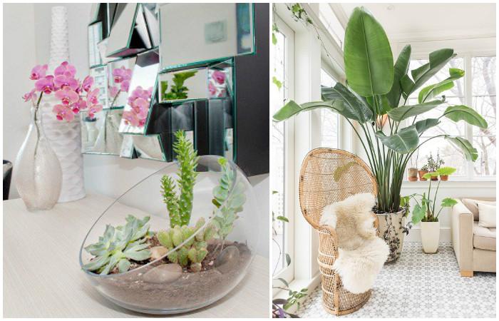 Растения - универсальный способ сделать дом приятнее.
