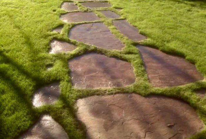 Тропинка, поросшая травой.