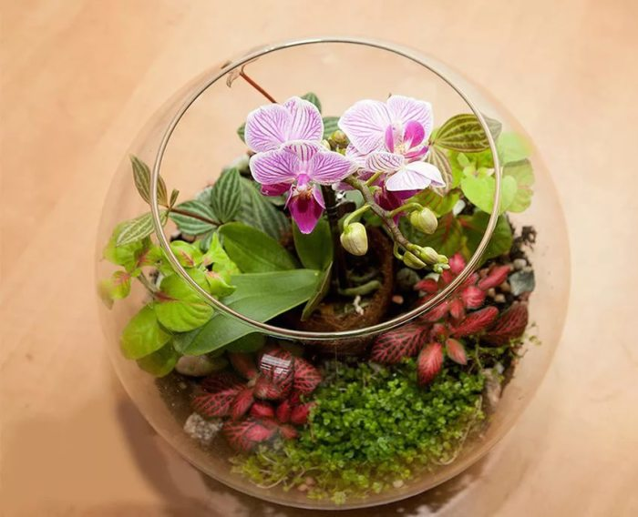 Цветы в аквариуме.