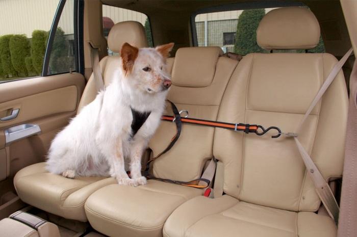 Приспособление для машины, где перевозят собаку.
