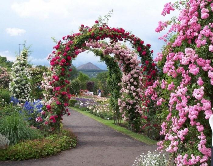 Цветочная арка.