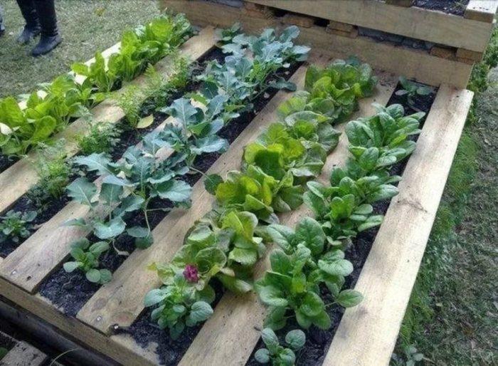 Палеты для выращивания растений.