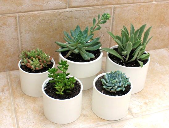 Горшки для растений из пластика.
