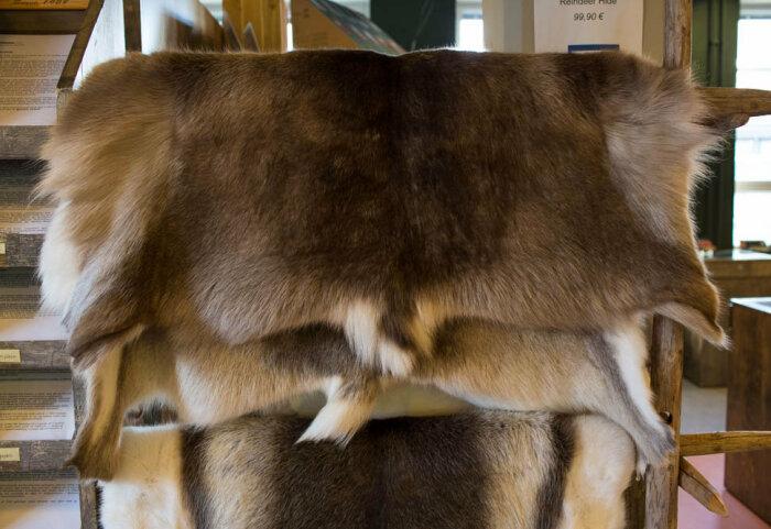 Средненькая выделанная шкура - порядка 10 тысяч рублей с рук оленевода. /Фото: u-96.livejournal.com.