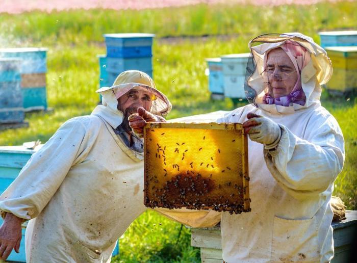Все дело в чистоте меда. /Фото: fb.ru.