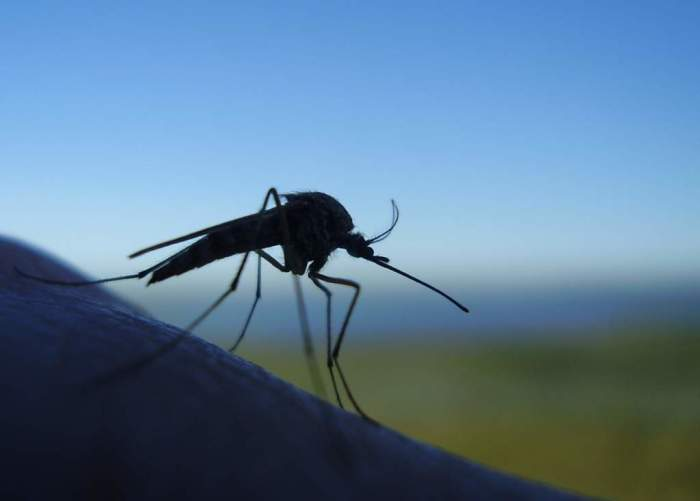 Комары не любят бальзам. /Фото: domovreditel.ru.