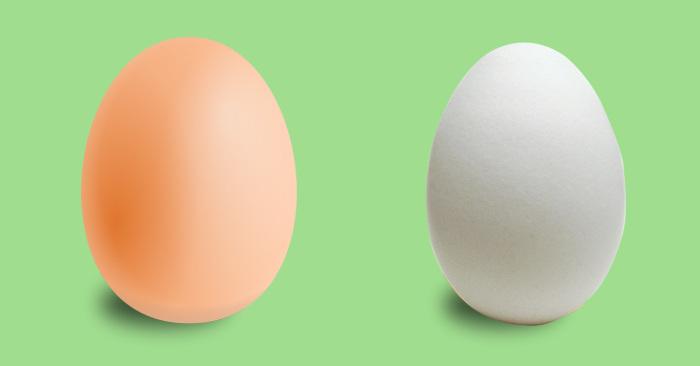 Разницы и нет. /Фото: wowfacts.buzz.