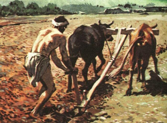 Корову одомашнили очень давно. /Фото: vk.com.