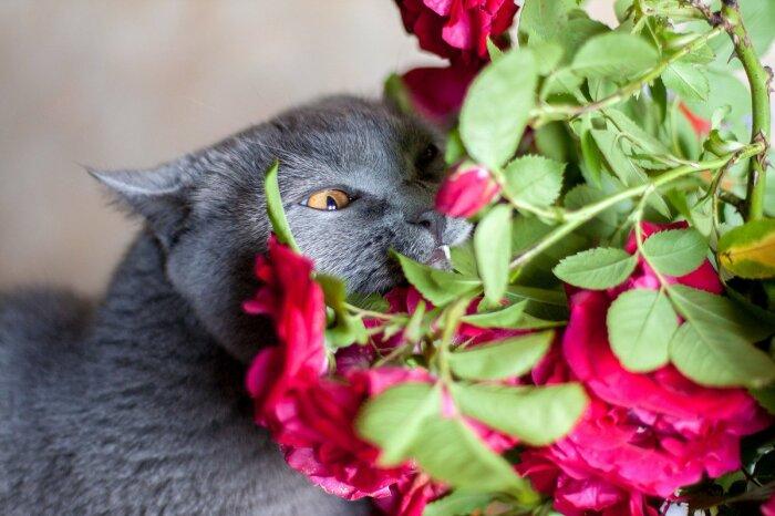 Нездоровая любовь к цветам. /Фото: pxhere.com.