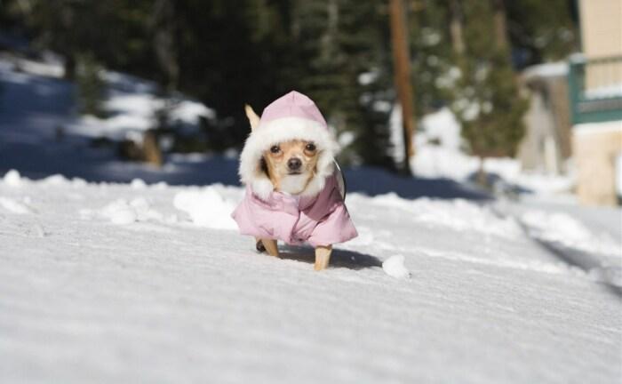 Утепление - обязательно. /Фото: myslo.ru.