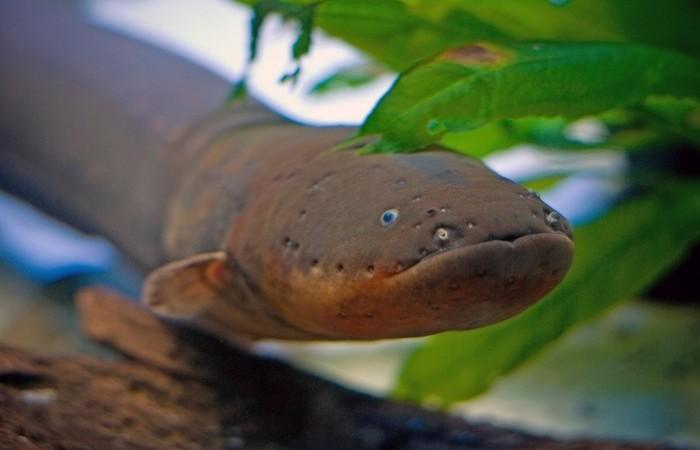 Природа действительно удивительна. /Фото: kot-pes.com.