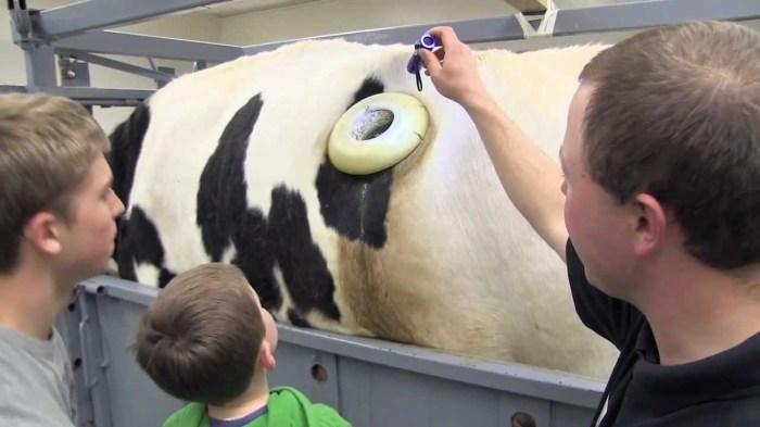Дырка нужна для ветеринарных процедур. /Фото: deti.mail.ru.