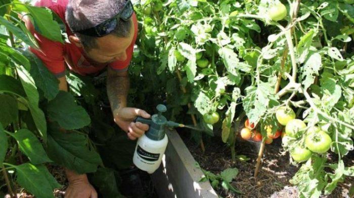 Незабываем про обработку. /Фото: agronom.expert.