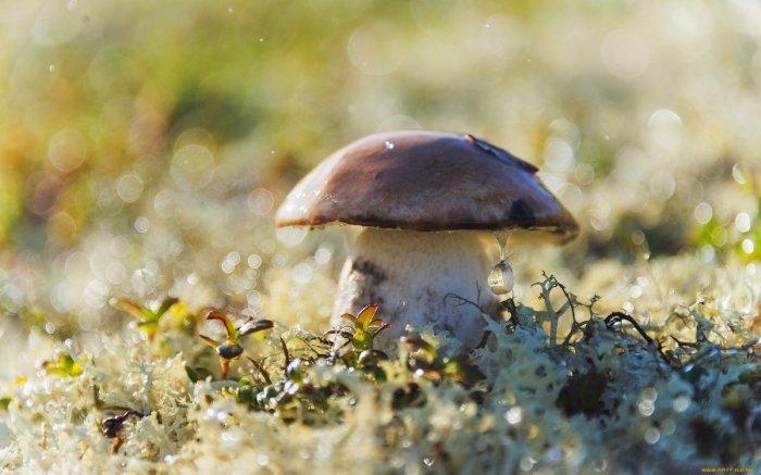 Скорость роста грибов разнится от их вида. /Фото: yandex.by.