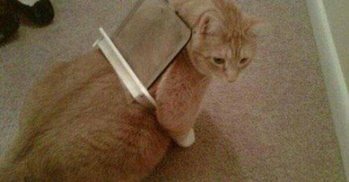 Голова не всегда самая большая часть тела кота. /Фото: ya.ru.