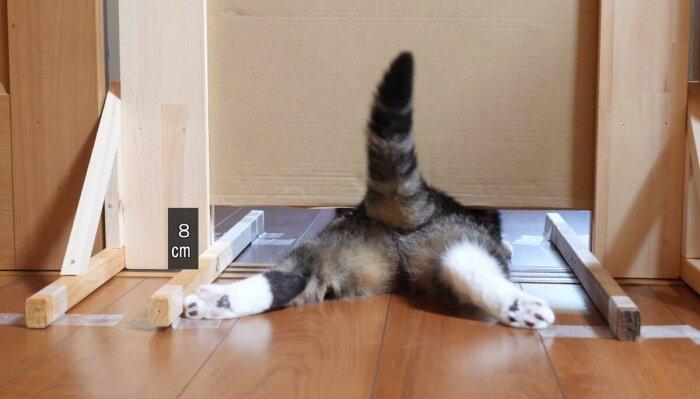 Коты легко протискиваются в щели благодаря особенностям скелета. /Фото: Twitter.