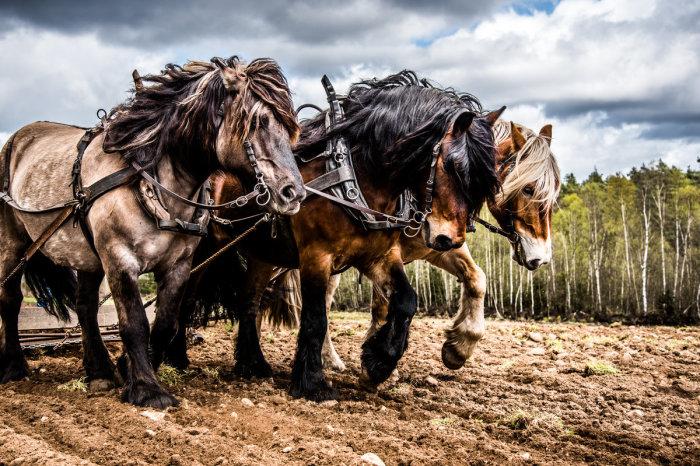 Лошади же бывают очень разные. /Фото: modernfarmer.com.
