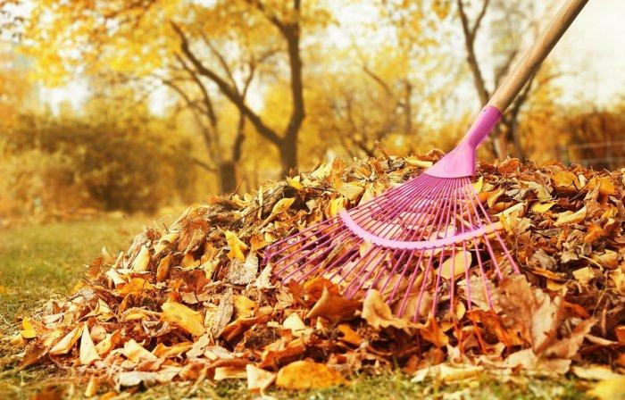 Собираем сырую листву. /Фото: yandex.ru.