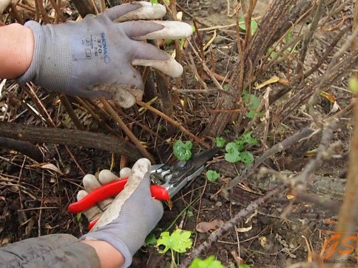 Обрезка делается с марта по апрель. /Фото: profermu.com.