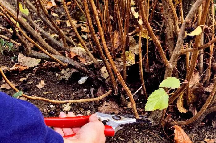 Удаляем ветки с плохой корой и поврежденными стволами. /Фото: pro-dacha.com.