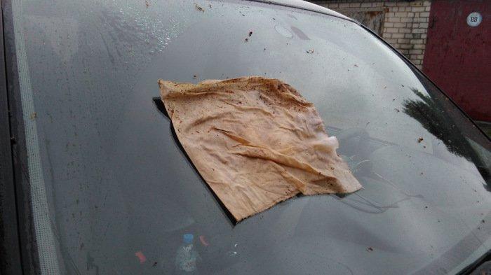 Помыть стекло тряпкой с табаком. /Фото: today.ua.