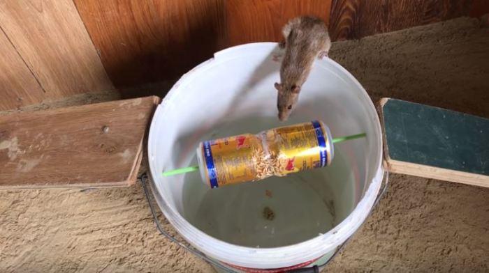 Мышка попадется. /Фото: youtube.com.