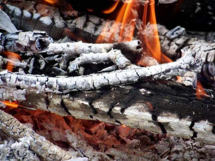 Подходит не каждое дерево. /Фото: mrdachnik.com.