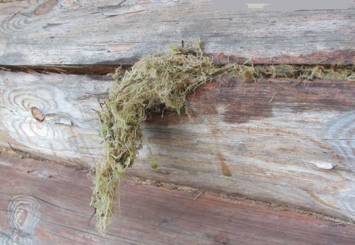 Самый деревенский способ. /Фото: zendiar.com.