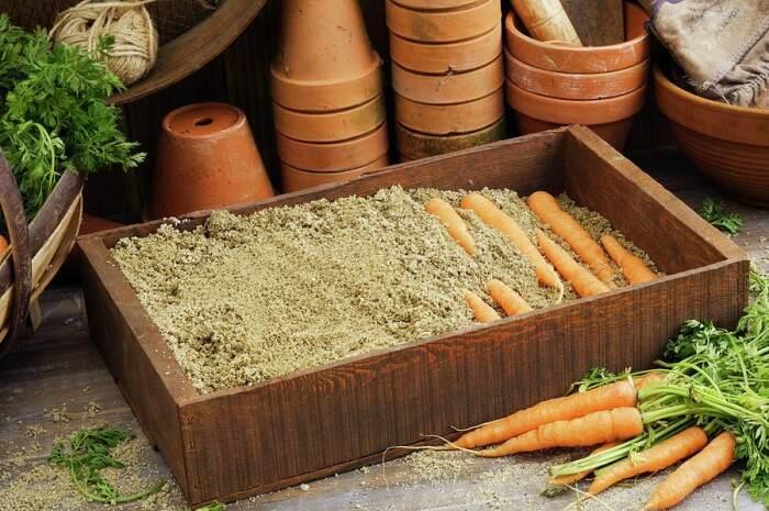 Укладываем морковку в песок. /Фото: mudriesoveti.ru.