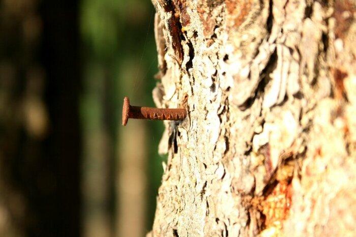 Чаще всего вбивают так, чтобы видно не было. /Фото: oleg-kozyrev.livejournal.com.