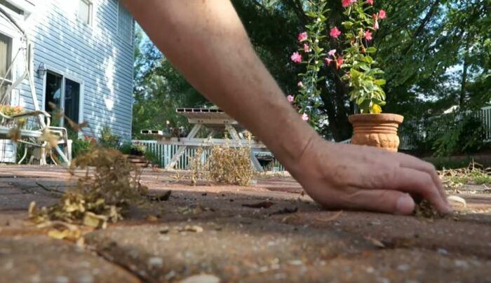 Убираем остатки сорняков. /Фото: youtube.com.