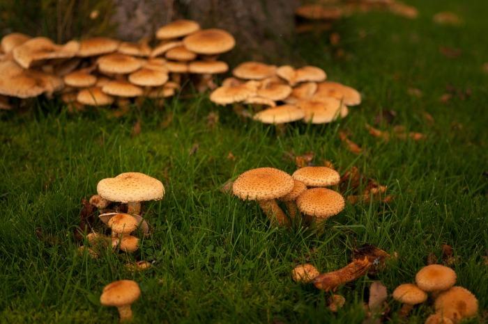Грядку по грибы лучше всего сделать в тени. /Фото: pixabay.com.