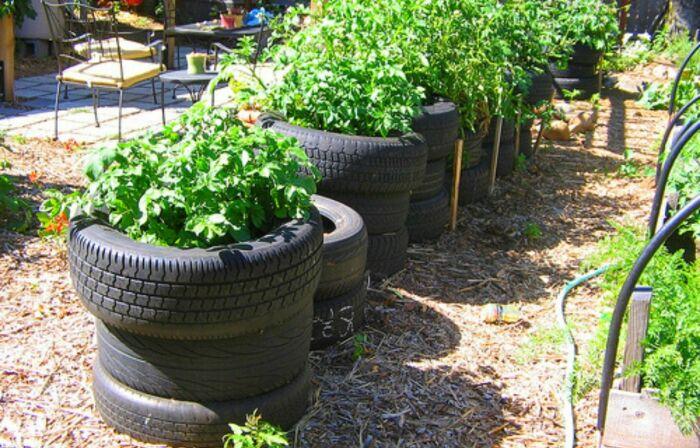 Вертикально выращивание имеет свои плюсы и минусы. /Фото: slickgarden.com.