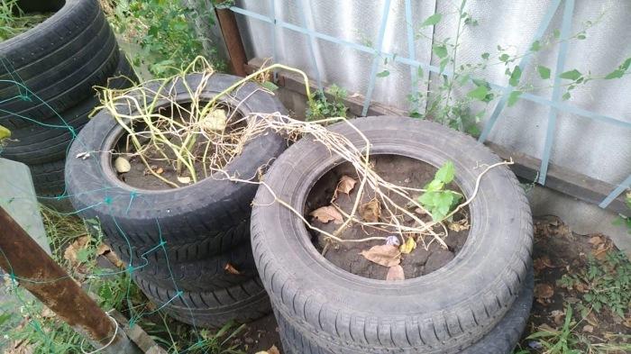 Заполнять покрышки лучше всего не землей, а компостом. /Фото: YouTube.