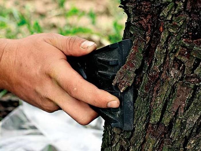 Повредить кору и помазать. /Фото: woman-time.ru.