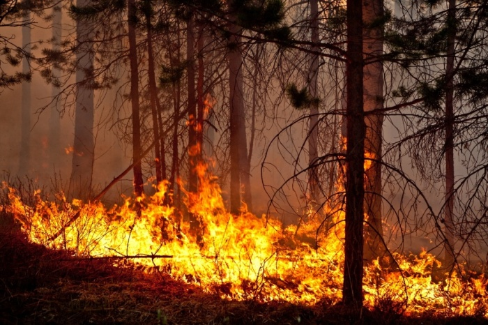 Летящие во все стороны угли - первый шаг к лесному пожару. /Фото: orbita96.ru.