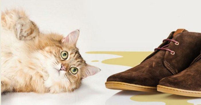 Кот не виноват, что он кот. /Фото: ubratdoma.ru.