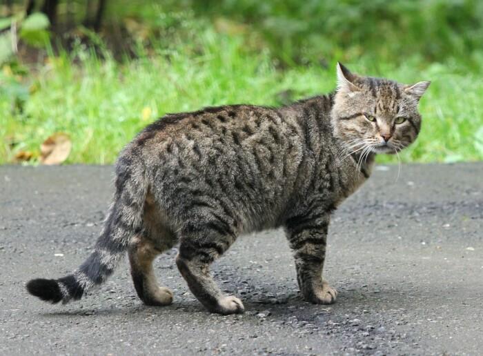 Дворовой кот смотрит на тебя со значением. /Фото: forum.awd.ru.