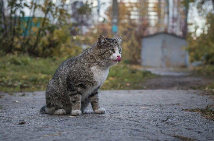 Коты без породы намного лучше. /Фото: fotostrana.ru.