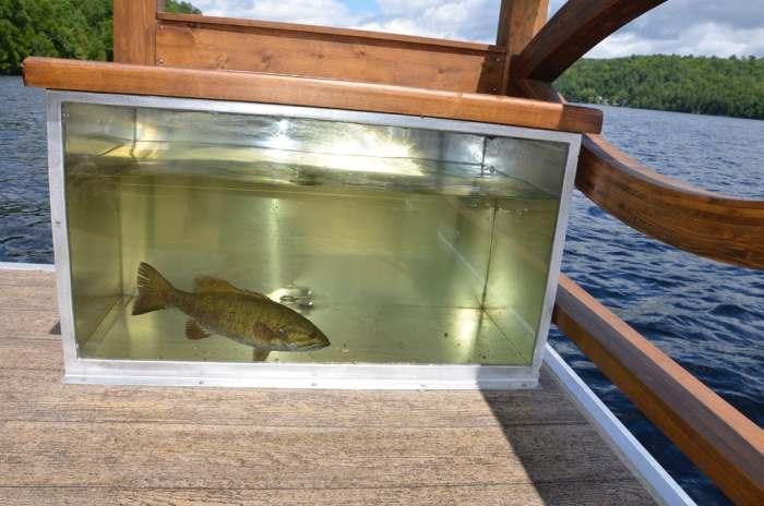 Есть аквариум для улова.