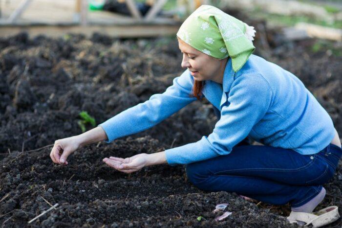 Лучше всего кормить почву за 2 недели до подсадки. /Фото: sveklon.ru.