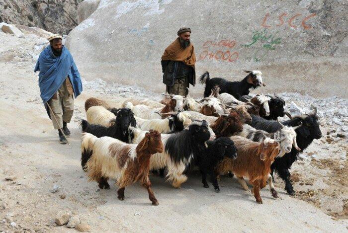 Судя по всему паколь изначально была пастушьей шапкой. /Фото: liveinternet.ru.