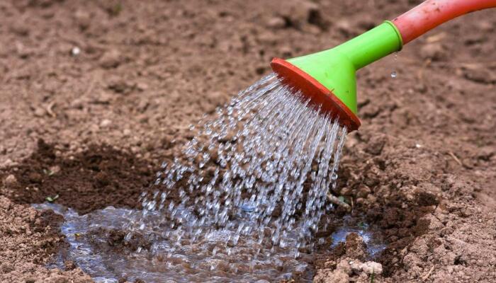 Сначала следует хорошо увлажнить почву. /Фото: semena-orel.ru.