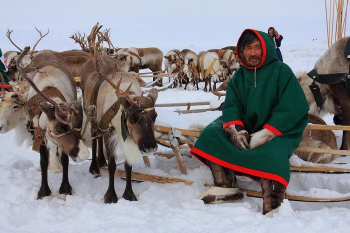Во время работы оленеводы предпочитают традиционную одежду. /Фото: Яндекс.Новости.