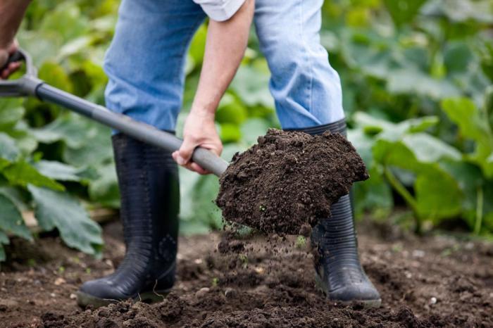 Почва должна быть подготовлена. /Фото: gogrow.club.