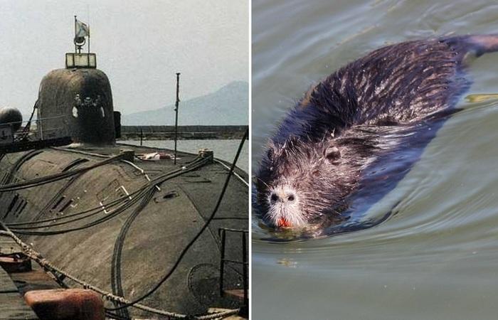 Откуда на советских субмаринах брались крысы, и как с ними боролись